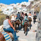 La cruel vida de los burros de Santorini, en manos de la conciencia de los turistas